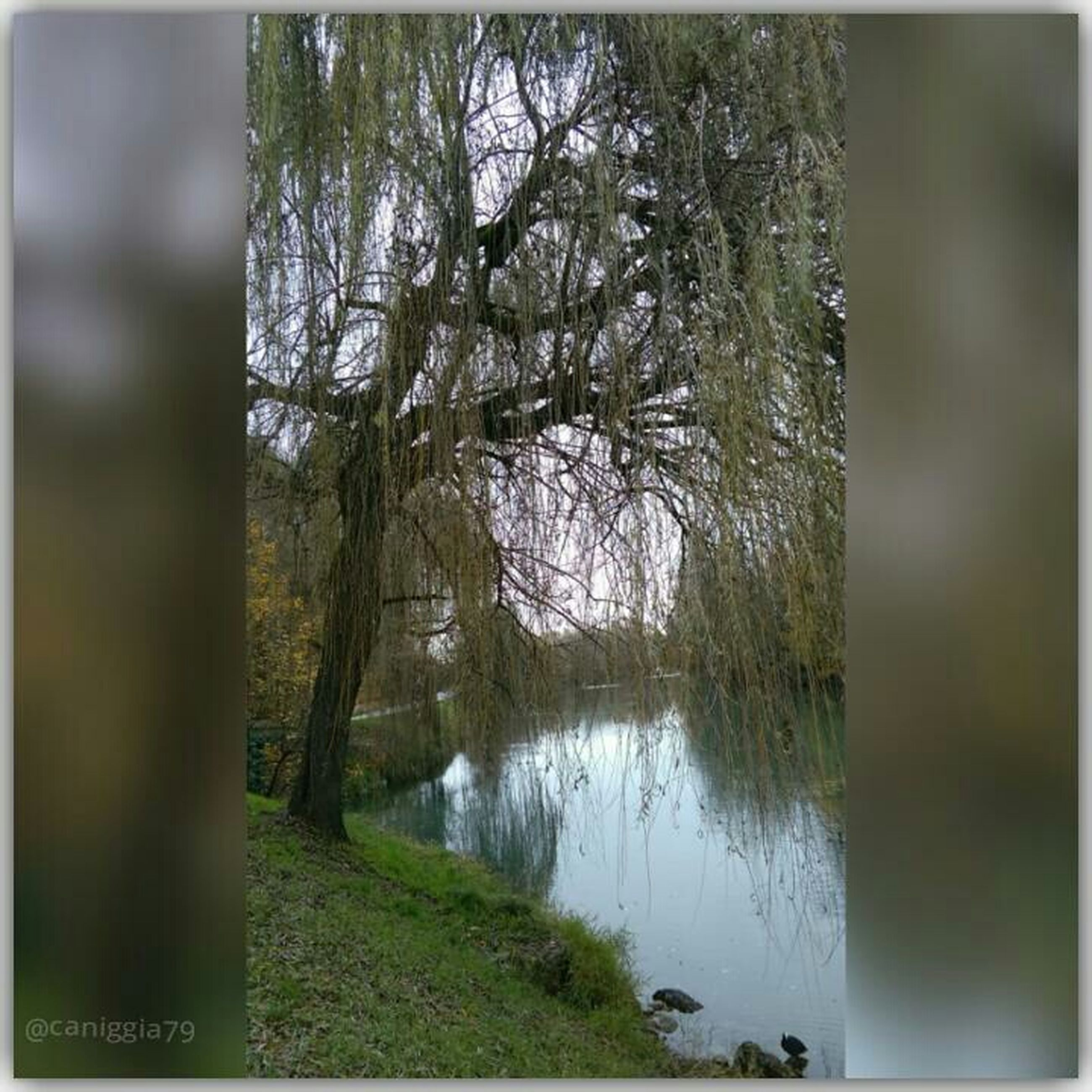 water, transfer print, tree, reflection, auto post production filter, lake, tranquility, tranquil scene, nature, river, branch, scenics, beauty in nature, growth, day, tree trunk, built structure, outdoors, grass, no people