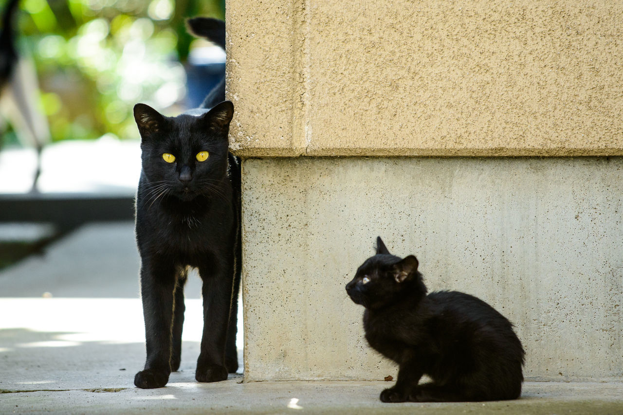 Black Cats By Wall