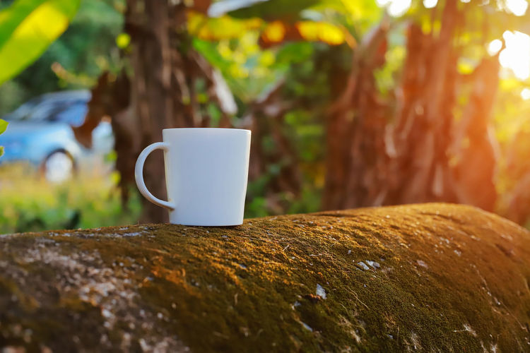 Cup Mug Coffee Cup No People Focus On Foreground Coffee - Drink Coffee Close-up Day Refreshment Food And Drink Selective Focus Drink Plant Outdoors Tree Nature Tree Trunk Rock Tea Tea Cup Surface Level Non-alcoholic Beverage Crockery