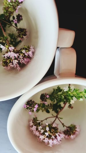 High angle view of purple flowers in bowl on table