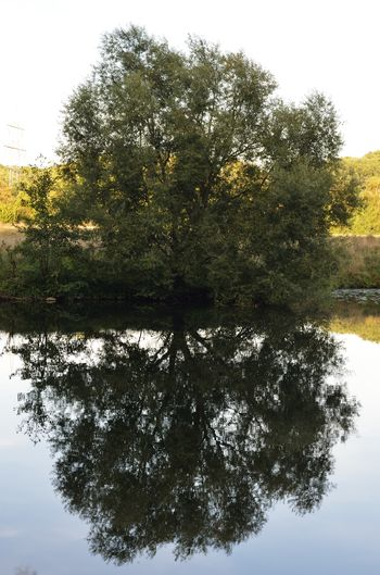 tree reflection