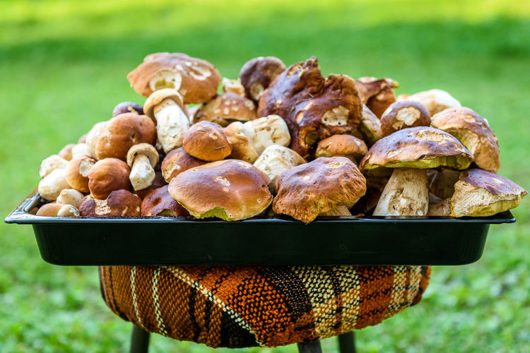 Boletus Edulis, penny bun or porcino is wild edible mushroom. Bunch of home picked wild Boletus Edulis mushroom fungus. Texture of a heap of edible fungus. Boletus Edulis Boletus Edulis Penny Bun Mushrooms Porcini Porcini Mushrooms Vegetarian Food Close-up Delicious Edible Mushrooms Food Food And Drink Forest Fresh Fruit Fungi Fungus Fungus 🍄 Healthy Eating Healthy Food Healthy Lifestyle Large Group Of Objects Meadow Organic Organic Food Penny Bun