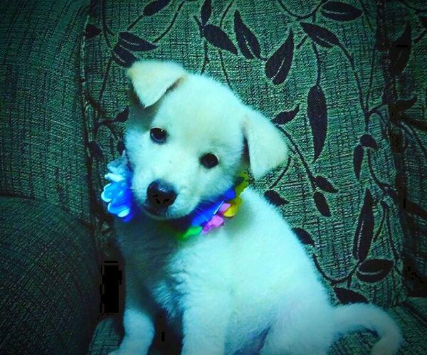 Dog Love Baby Cute♡ Pets Goodboy