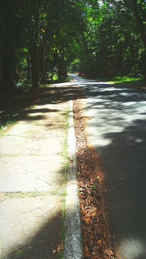 Walk with me Beauty In Nature Tranquil Scene No People Sunlight Shadow Tree Nature EyeEmNewHere
