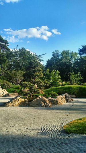 Tree Day Outdoors Sky No People Cloud - Sky Nature Kioto Park Kiev Prickly Pear Cactus City Life