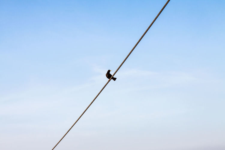 LINE Bird Wire Bird On The Wire Negative Space Sky Silhouette Minimalism Crow Nature One Single Center Connection Freelance Outdoors Empty Diagonal Internet Black