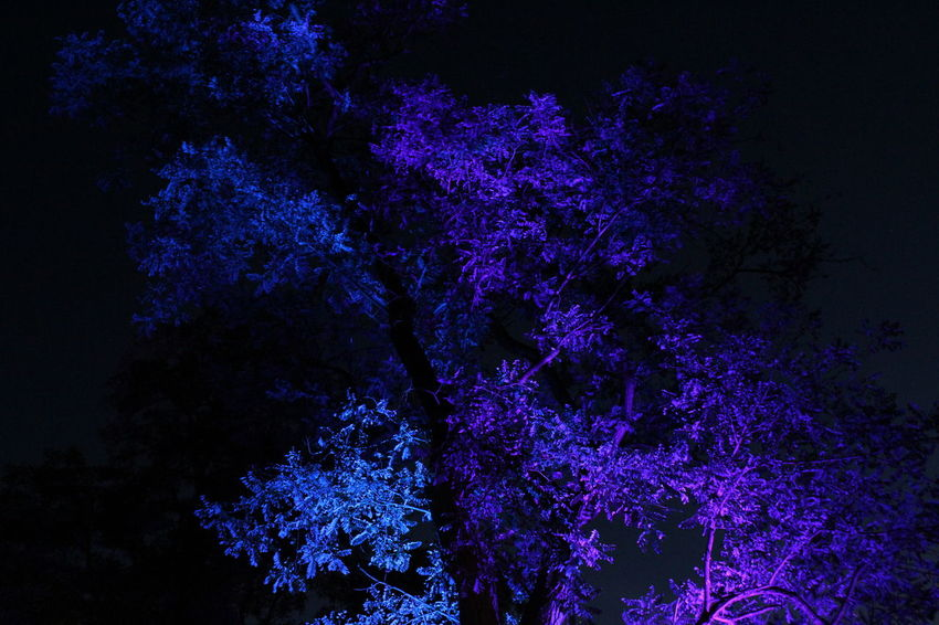 Dark Darkness And Light EyeEm Gallery EyeEm Illuminated EyeEm Nature Lover Illuminated Learn & Shoot: After Dark Lichtspiele Light Night Nightphotography Non-urban Scene Outdoors Poesie Des Lichts Schloss Dyck Tranquil Scene Tranquility Tree TreePorn Vibrant Color