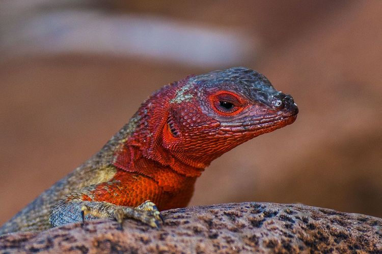 CLOSE-UP OF THE HEAD OF A LIZARD