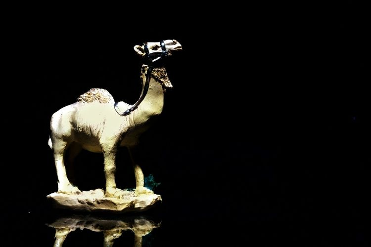 Phone Photography Torchlight Camel Learning Like A Idiot! Photography Love