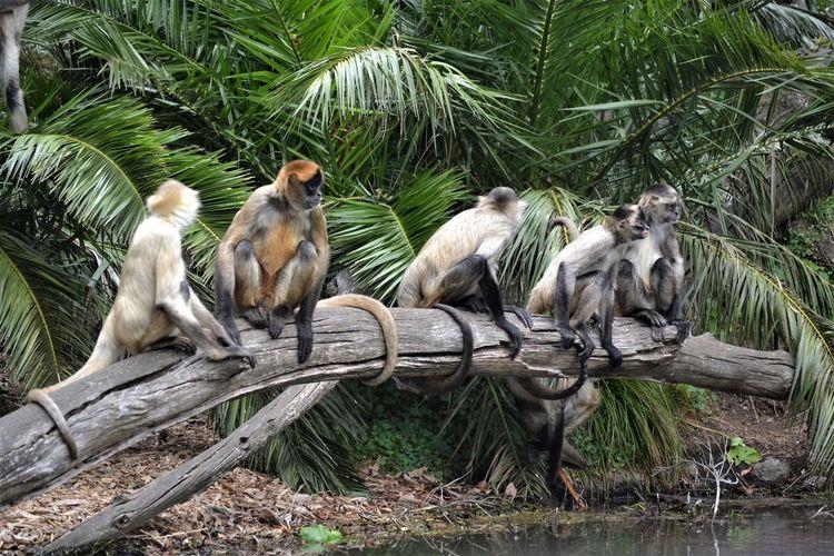 Monkeys sitting on fallen tree