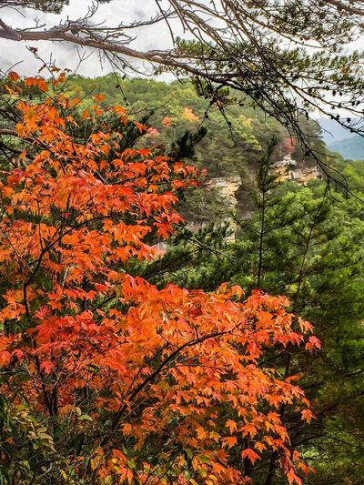 The Great Outdoors With Adobe ShotOniPhone6 Eyemnaturelover Protecting Where We Play South Cumberland State Park Nature Photography Outdoor Photography Tennessee Autumn Stonedoor The Great Outdoors - 2016 EyeEm Awards