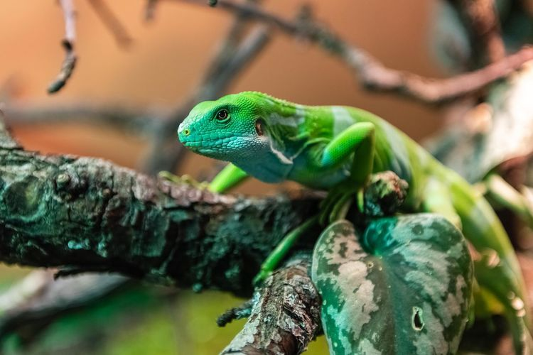 Close-up of lizard sitting on branch
