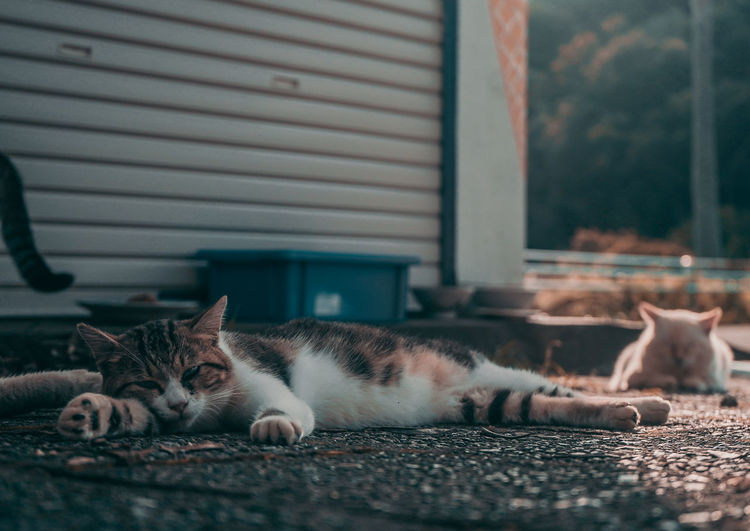 EyeEm Best Shots Japan Shootermag AMPt_community EyeEm Gallery Thedarksquare Domestic Pets Domestic Cat Cat Feline Domestic Animals Mammal Animal Themes Animal Vertebrate Relaxation One Animal Lying Down No People Resting Selective Focus Architecture Looking At Camera Whisker Portrait