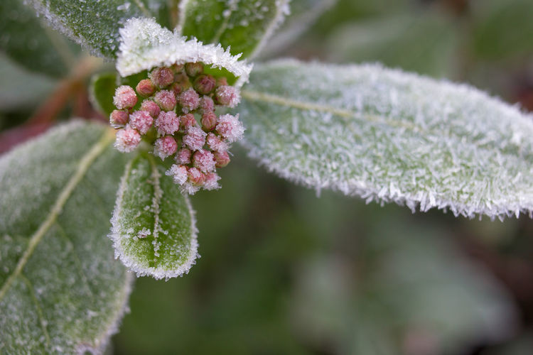 Close-up of snow on plant during winter