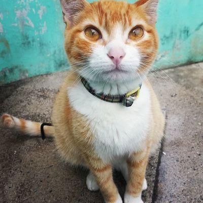 DiárioDeAslan : volta logo pra casa, leãozinho... 😢💔😽😚 Galaxys4camera Instafofura Instacat gato instapet felino