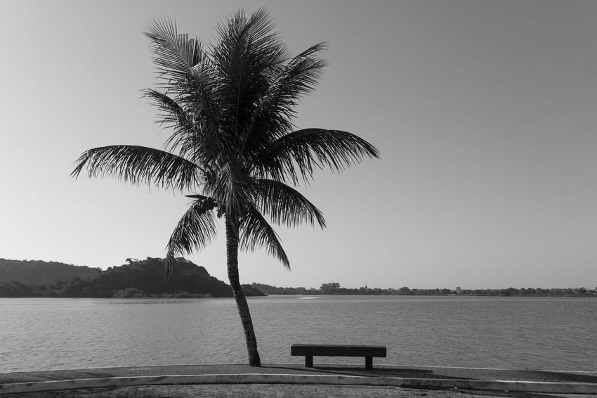 Sit and relax Beach Beauty In Nature Blackandwhite Clear Sky Day Julhofragaphotography Nature No People Outdoors Palm Tree Scenics Sea Sky Tranquil Scene Tranquility Tree Water