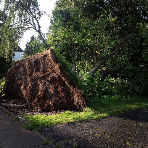 Umgestürzter Baum Tree Unwetter Gewitter Folge 😱 Kaputt