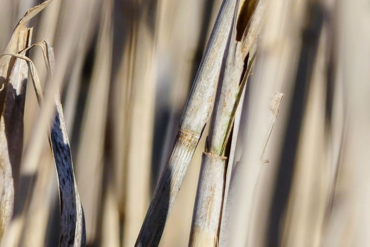 Perspective Detail Nature Dried Plant Dried Grass Plant Beauty In Nature No People Backgrounds Full Frame Pattern Close-up Growing Plant Life Grassland Blade Of Grass Blooming Growth Fragility