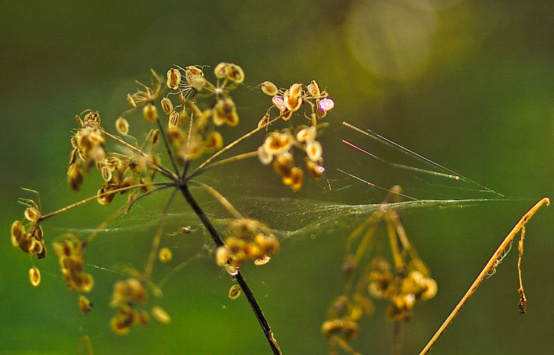 Animal Themes Beauty In Nature Close-up Day Flower Focus On Foreground Freshness Nature No People Outdoors Spider Web