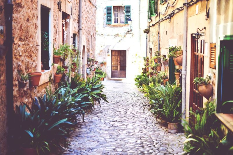 Alley Plants Holiday Mallorca Beauty In Nature Loveit EyeEm Nature Lover Vanishing Point Walk This Way Nature On Your Doorstep