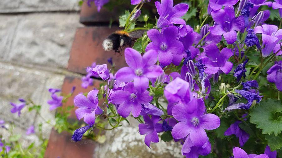 Flower Buzzing