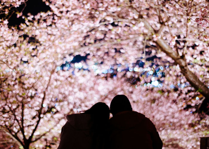 Rear view of couple against flowering trees at night