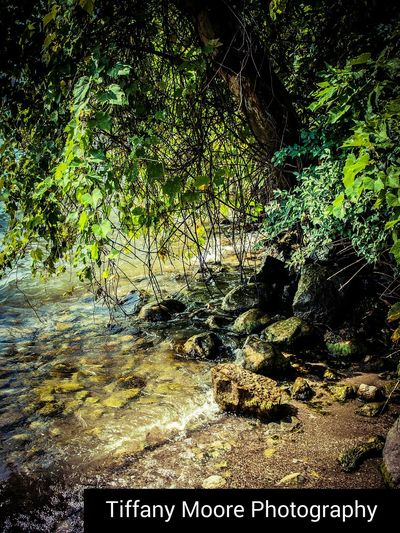 By the River Tree River Rocks Stream Creek Water Backgrounds Full Frame Close-up Growing