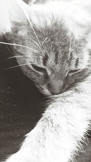 Things I Like Relaxing Coco'sPics Rescuecat Capo Cats Of EyeEm MyBoy Black And White Photography Capokitty Cat♡