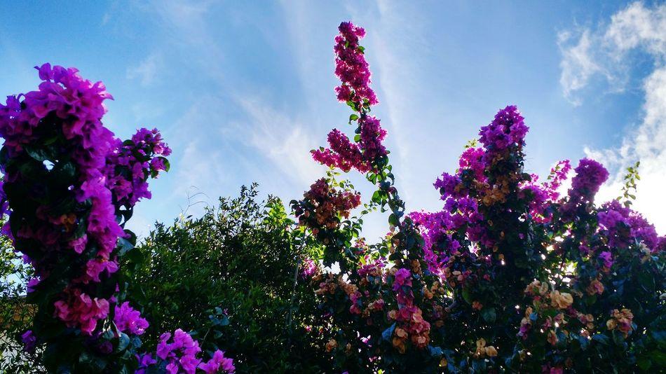 Nature Flowers,Plants & Garden