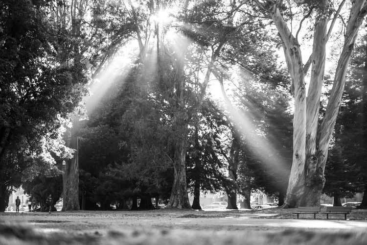 Afternoon light in the Panhandle of Golden Gate Park. Tree Plant Nature Day Growth No People Sunlight Park Outdoors Tranquility Beauty In Nature Park - Man Made Space Footpath Tranquil Scene Tree Trunk Trunk Grave Water Road Cemetery Treelined San Francisco Golden Gate Park Capture Tomorrow