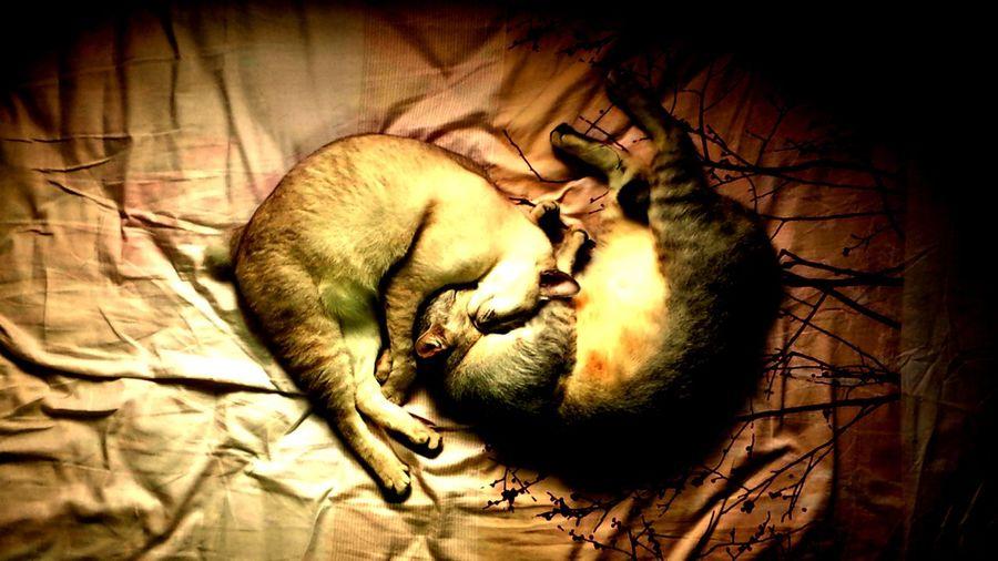 AMPt_Nature Cat My Feline Friends KAWAII