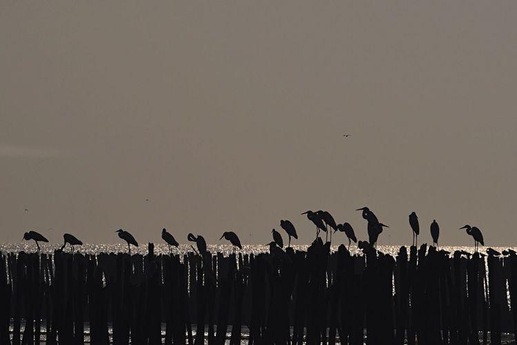 Born to be wild. Savethebird Savetheearth Savetheplanet SaveAnimals Shorebirds Waterbirds Beforethesunset Enjoying Nature Enjoying Life Enjoying The Sun
