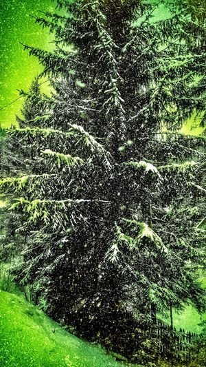 Editing...Backgrounds Green Color Full Frame No People Nature Textured  Beauty In Nature Abstract Grass Day Close-up Outdoors Retro Styled Falling Snowflakes Artistic Eye Falling Snow Pinetrees🌲 Cold Temperature Edited My Way Winter Wonderland Falling Snowflake Falling Snowwwwwww ❄❄❄❄❄❄❄❄❄❄❄❄❄ Pinetrees Retro Tree