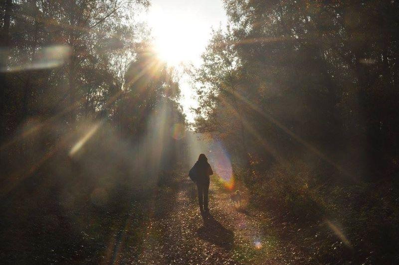 Magic Light And Shadow Colors Forest Vieuw Shiba Inu Walking Sun Beautiful Someplace