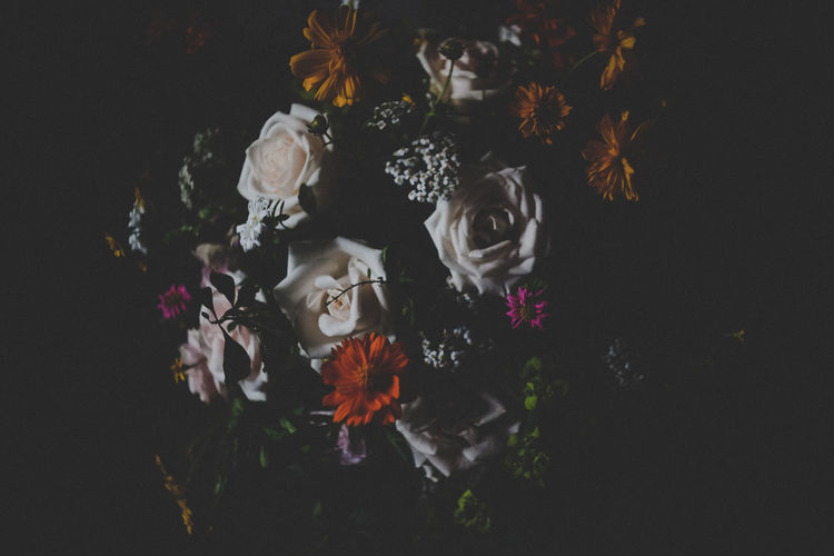 Beauty In Nature Black Background Blooming Bouquet Close-up Dark Flower Flower Head Fragility Growth Hoang Ann In Bloom Multi Colored Nature No People Plant Rose - Flower