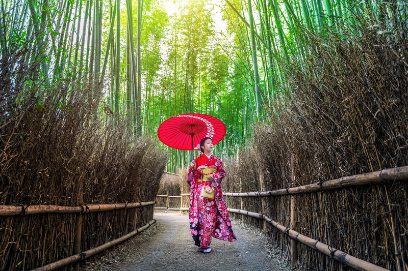 Rear view of woman with red umbrella walking in bamboo groove