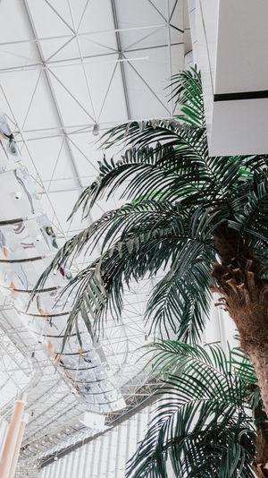 Close-up of palm tree seen through glass window