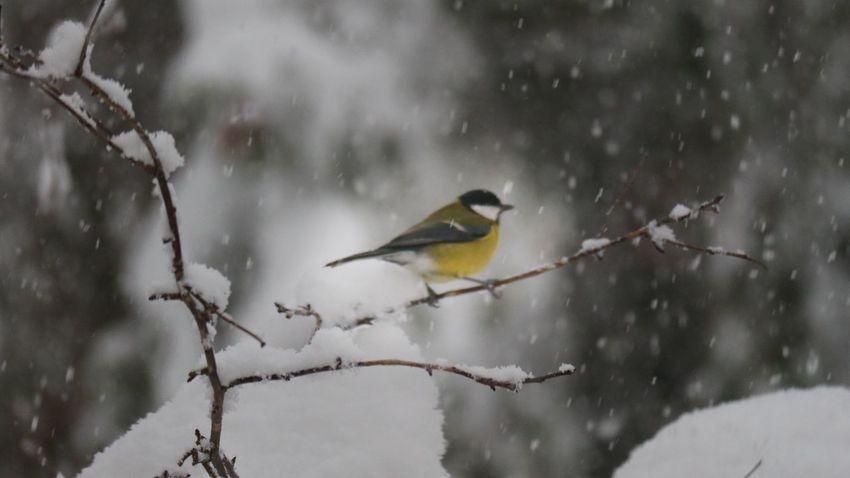 Bird Animals In The Wild Animal Themes Animal Animal Wildlife Vertebrate Snow