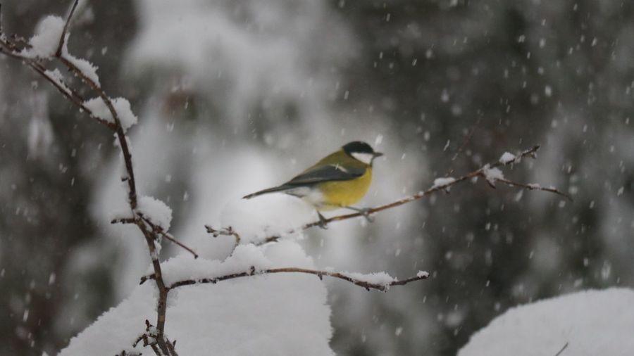 Bird perching on branch during winter