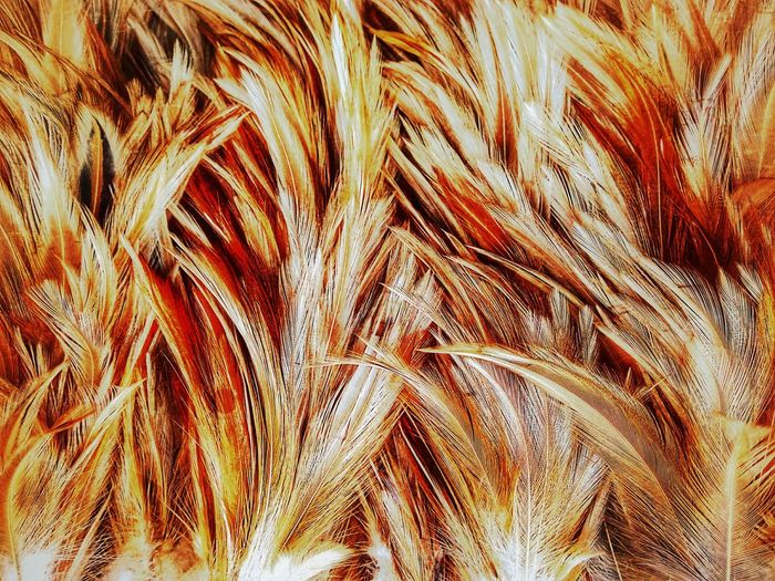 Feather  Feathers Feather Collection Nature Abstract Abstract Art Nature Art Nature Art Photography Imagination Imagination Photography Imagination Collection Close Up Close Up Photography Feather Art Feather Color Colorful Feather