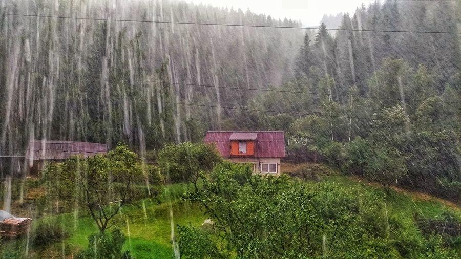 rain in a