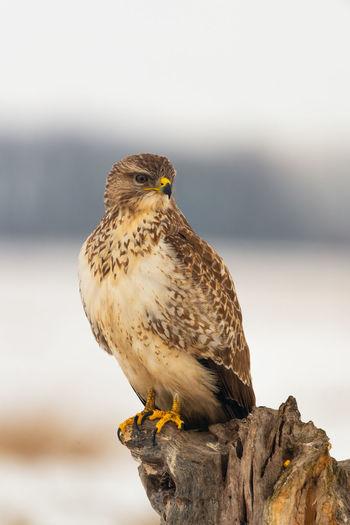 Close-up of bird perching on a rock