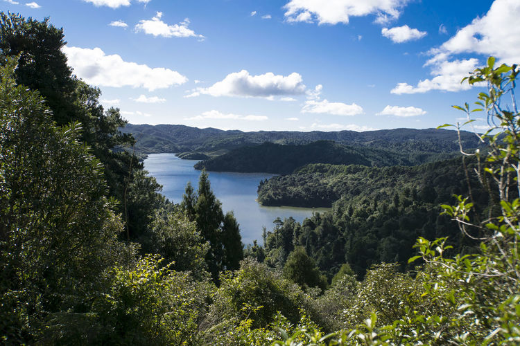 Landscape Nature Forest Lake Newzealandoutdoors