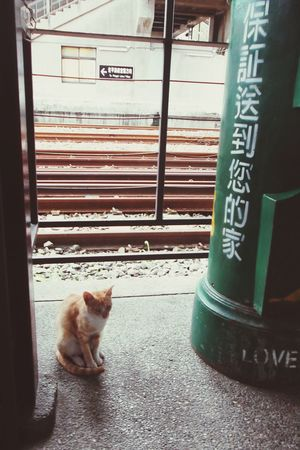 Tiny Cat Whatareyoudoing Lonely FirstTime Oneday Memories Pointofview Love Sweet Oldsummermemories Findme Imhere