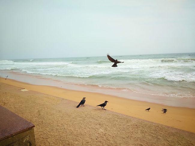 Bird Water Wave Flamingo Flying Sea Pets Beach Full Length Sand Sea Bird Surf Rushing