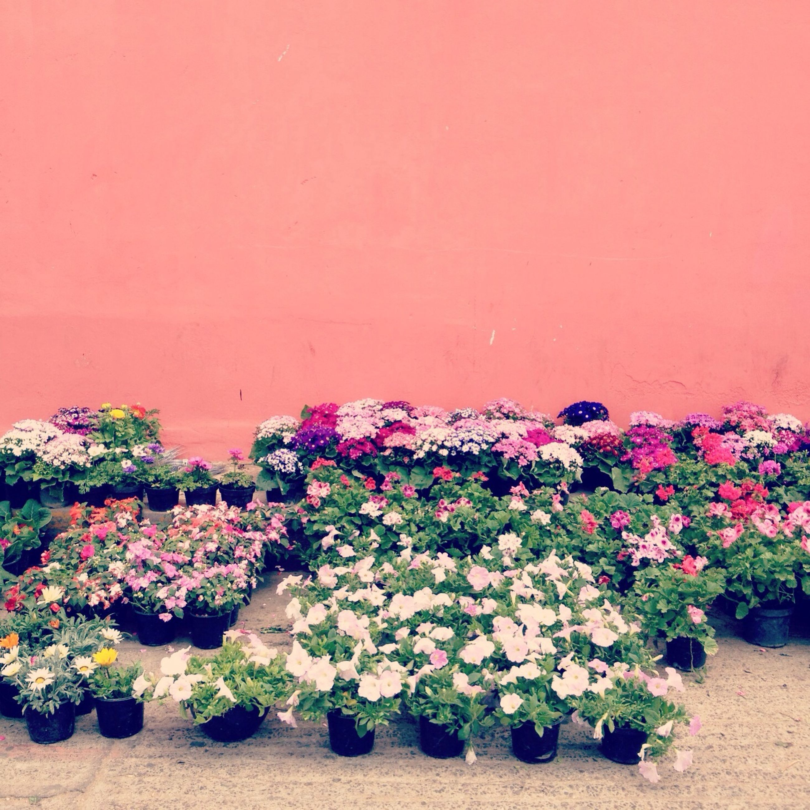 multi colored, flower, wall - building feature, variation, plant, copy space, growth, abundance, decoration, arrangement, nature, wall, beach, freshness, outdoors, beauty in nature, sand, no people, colorful, large group of objects