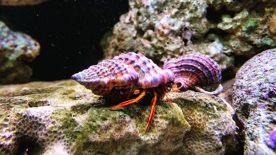 Crab Hermit Crab Marine Life Marine Ocean❤ Seafish