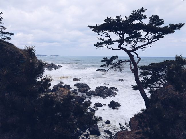 Water Sky Tree Sea Cloud - Sky Plant Nature Beauty In Nature Day Outdoors Rock