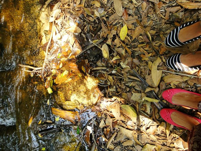 Perspective Photography High Angle View Phone Photography River Bank View Looking Down Shoes Perspective Cambodia Leaves Background