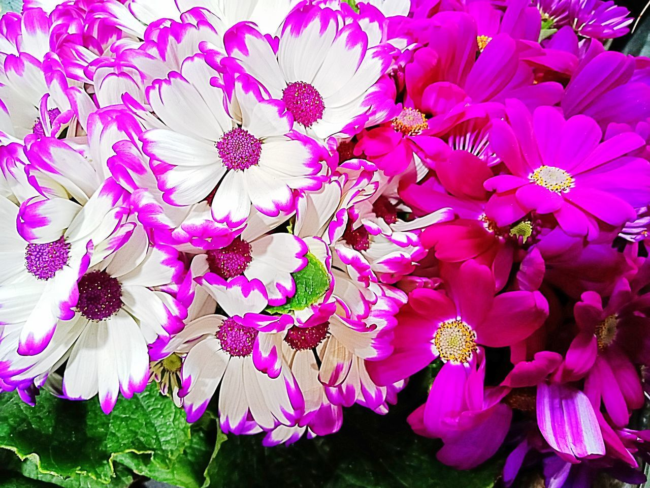 flower, flowering plant, petal, freshness, fragility, vulnerability, plant, beauty in nature, flower head, pink color, close-up, growth, inflorescence, no people, nature, day, outdoors, pollen, high angle view, botany, bunch of flowers, purple, flower arrangement